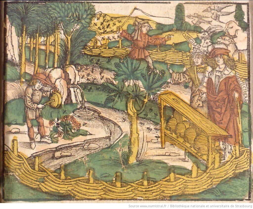 Apiculture (1509)