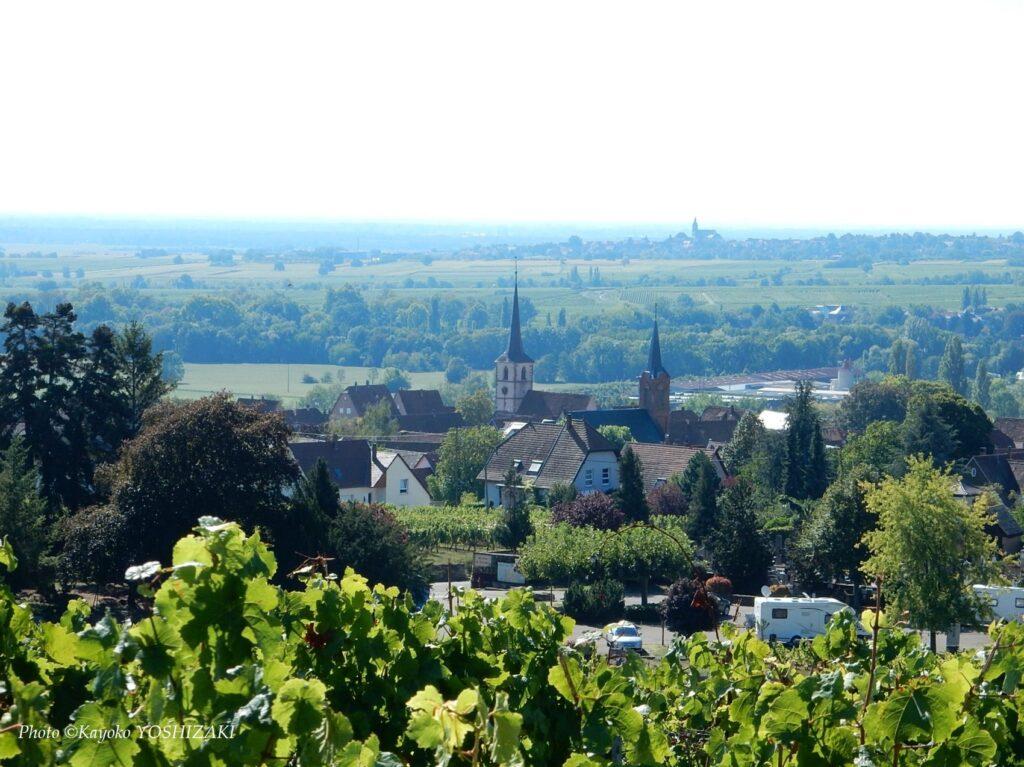 Mittelbergheim-vue-en-haut