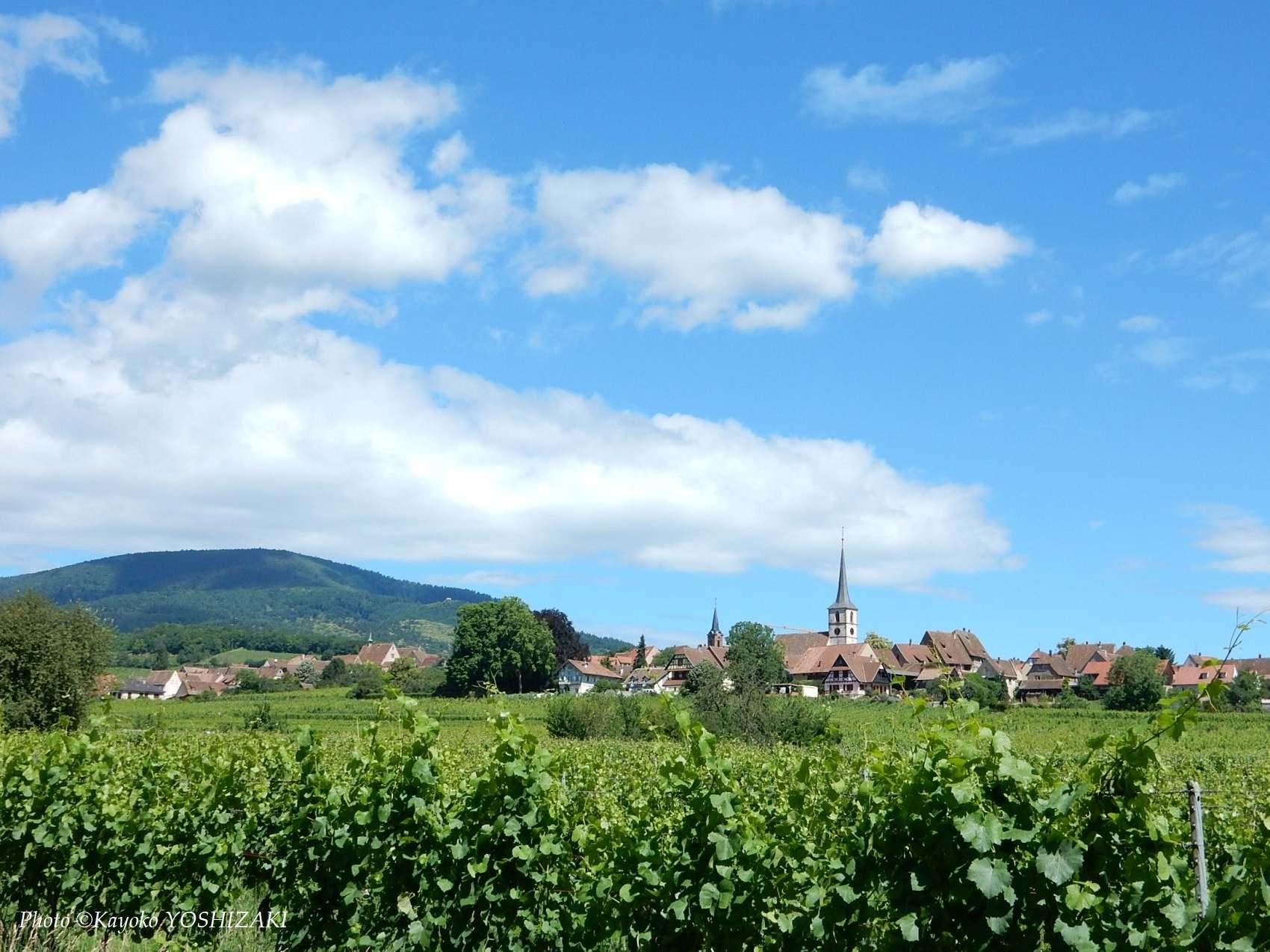 Mittelbergheim-vue-village